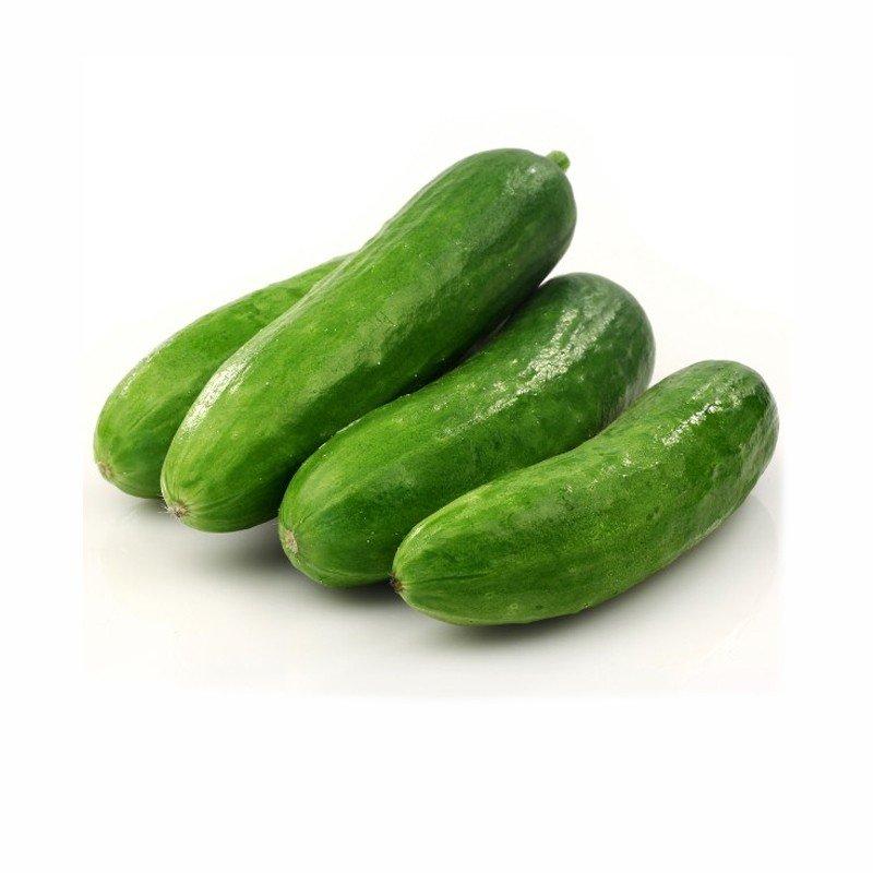 Native Cucumber
